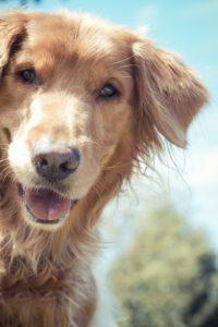 Quantum-techniques-blog-dog-healing-skin-issues-on-pets