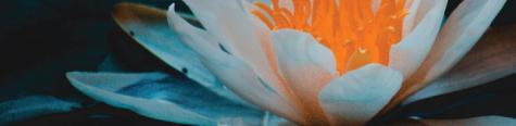 quantum-techniques-faq-fundamentals-flower