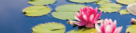 quantum-techniques-faq-store-lily-pads-and-flowers-in-pond